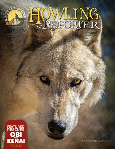 The Howling Reporter Fall 2020 Cover