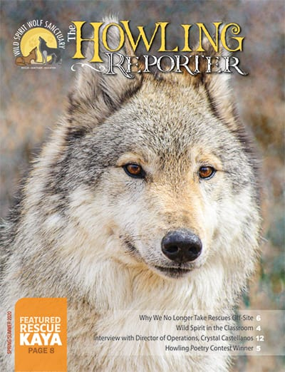 Spring 2020 Howling Reporter Cover