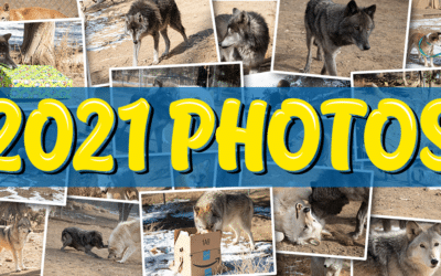 Photo Slideshow – March, 2021