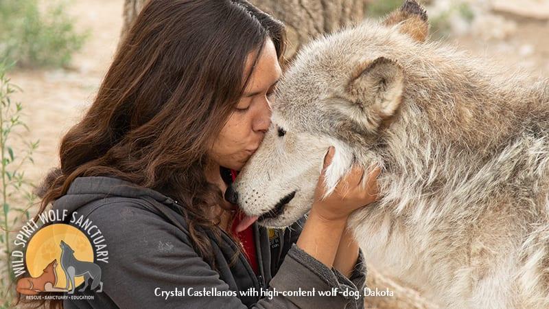 Crystal Castellanos with wolfdog rescue, Dakota