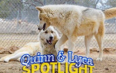 Spotlight: Quinn and Lyca