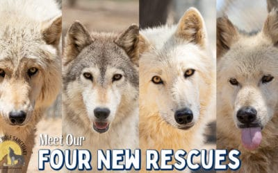 Four New Rescues!