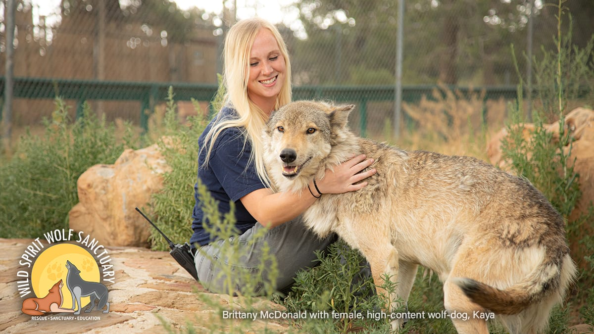 Brittany McDonald with wolfdog rescue, Kaya