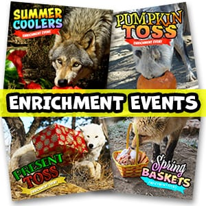 Enrichment Events