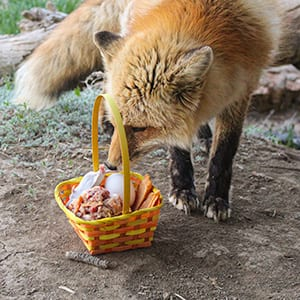Spring Basket Enrichment Event