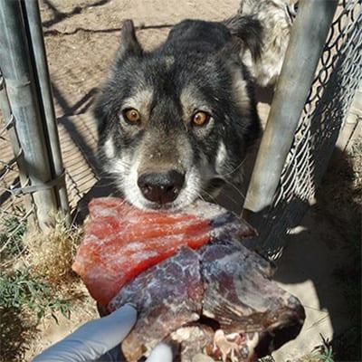 Juno - Domestic Dog