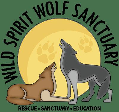 Wolf And Wolfdog Rescue Sanctuary Home Wild Spirit Wolf Sanctuary